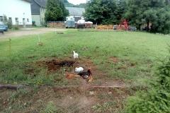 Hühner-2