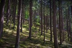 Im-Wald-3