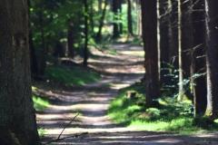 Im-Wald-4